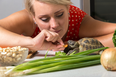 Female tries to feed tortoise with piece of carrot