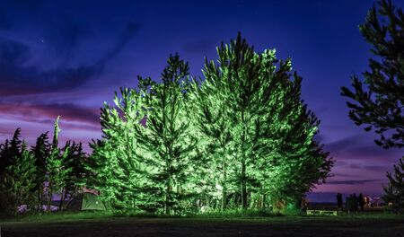 Evergreen trees lit up at festival
