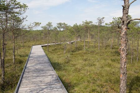 Swamp with wooden pathway Stock Photo