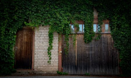 Overgrown old wooden garage door