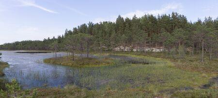 Panorama of bog lake