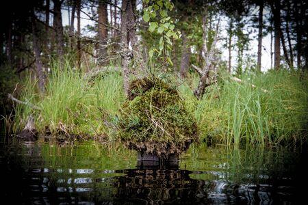 Grassy island in swamp lake Stock Photo