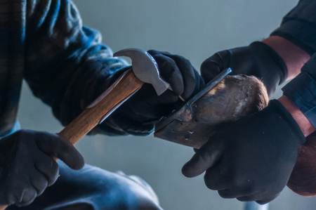 Blacksmith putting up the metal horse shoes to the horses hooves.