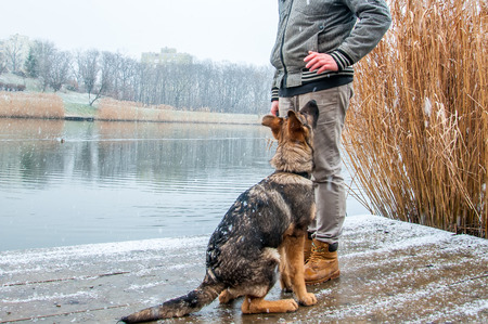 A german shepherd puppy dog a leash with its owner on in a winter urban environment with snowfall