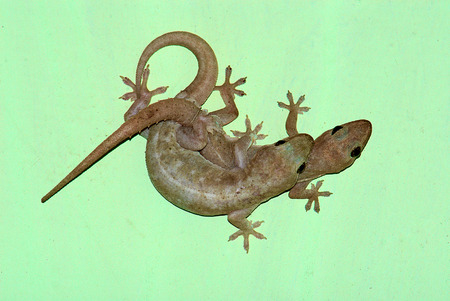 auctioning: lizard Stock Photo