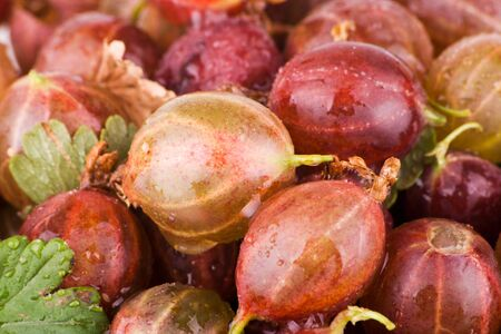 Wet gooseberries with waterdrop macro