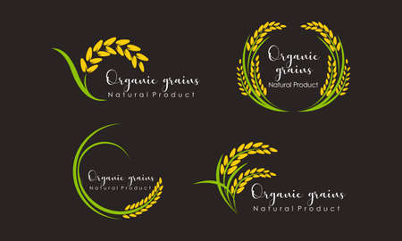 Set of Paddy wheat, rice organic grain products food banner logo