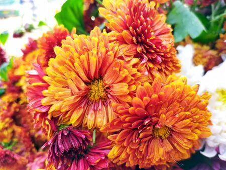 fresh multi color flower put on a flower shop Zdjęcie Seryjne