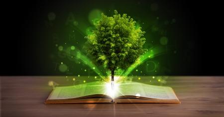 Open boek met magische groene boom en de stralen van licht op houten dek Stockfoto
