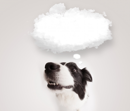 Cute black and white border collie with empty cloud bubble above her head photo