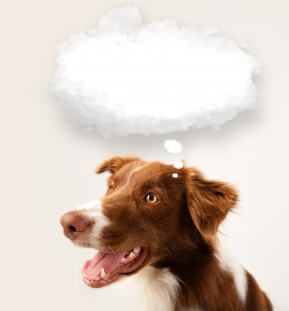 Cute brown and white border collie with empty cloud above his head photo