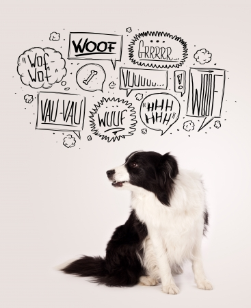 Cute black and white border collie with barking speech bubbles above her head photo