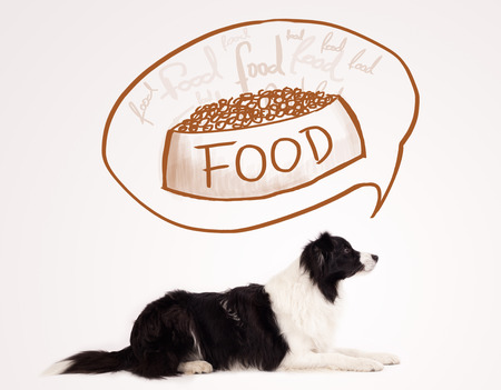 Cute black and white border collie thinking about a bowl of food in a thought bubble above her head photo