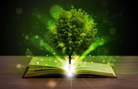 dream land: Open book with magical green tree and rays of light on wooden deck