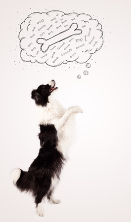 dog food: Cute black and white border collie dreaming about a bone in a thought bubble