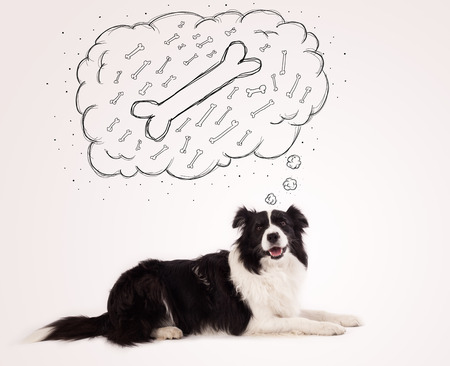 Cute black and white border collie lying and dreaming about a bone in a thought bubble photo