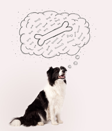 Cute black and white border collie sitting and dreaming about a bone in a thought bubble Stockfoto