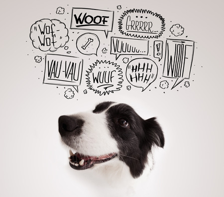 thinking bubble: Cute black and white border collie with barking speech bubbles above her head