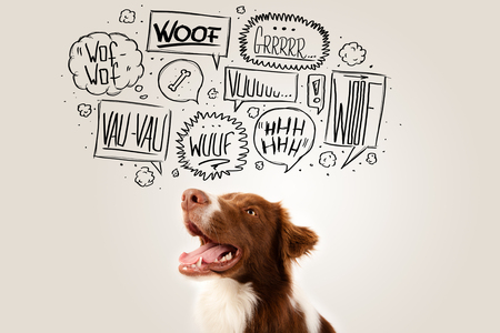 message cloud: Cute brown and white border collie with barking speech bubbles above his head Stock Photo