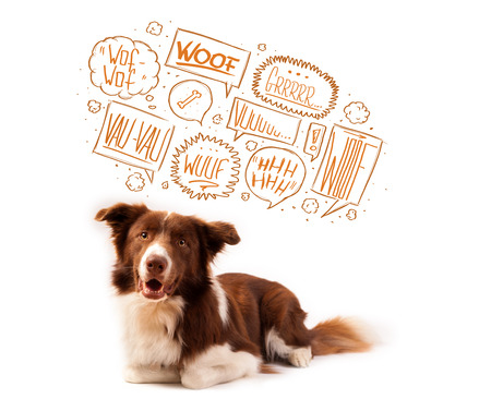 barking: Cute brown and white border collie with barking speech bubbles above his head Stock Photo