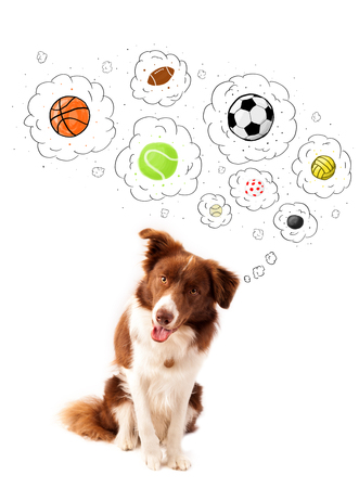 thinking bubble: Cute brown and white border collie thinking about balls in a thought bubbles above his head