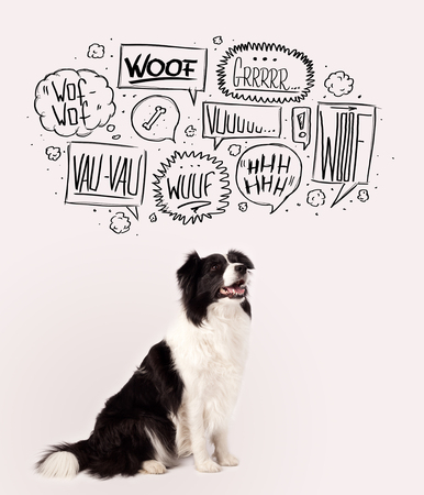 barking: Cute black and white border collie with barking speech bubbles above her head
