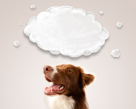 thinking cloud: Cute brown and white border collie with empty cloud above his head Stock Photo