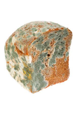 썩은 빵. 흰 배경에 고립