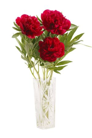 Peonies Bouquet in a glass vase isolated on white background. Stock Photo - 6939915