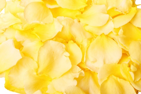 Natural background of fallen petals of Yellow roses