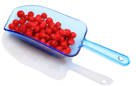 Berries frozen red currants in a blue scoop isolated on a white background photo