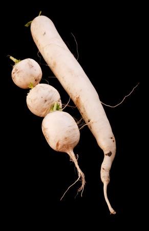 dikon: Asia r�banos gigantes blancos, tambi�n conocidos como daikon. Aislado en un fondo negro