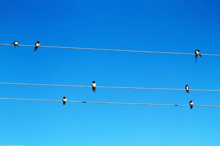 Swallows on a power line against the blue sky. Nature background photo