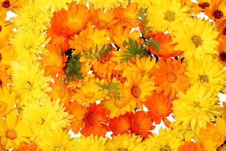 Gelben und orangen Blüten-blumigen Hintergrund auf einem weißen Hintergrund