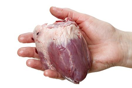 donacion de organos: Gran coraz�n en una mano femenina aislado en un fondo blanco