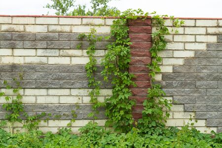 Brick wall with ivy background and texture photo