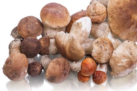 porcini: Heap porcini mushroom isolated on white background