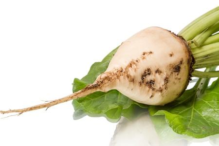 흰색 배경에 고립 된 사탕무