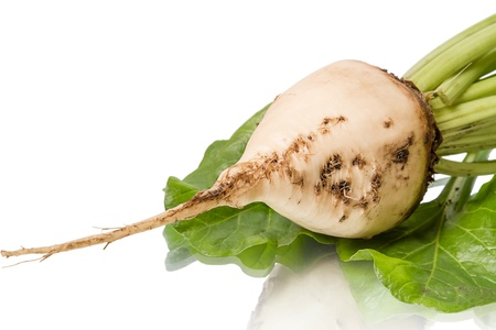 Sugar beet  isolated on white background photo