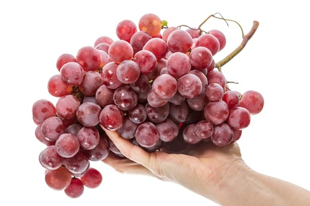 Large brush of red grapes on a female palm  Isolated on white background