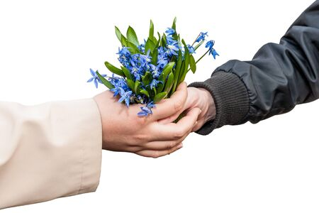 Hands girls and men with a bouquet of snowdrops isolated on white background photo