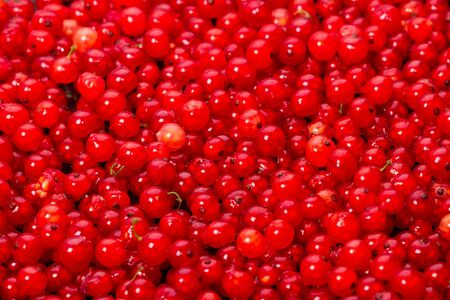 red currants: Background of red currants. Nature food Stock Photo
