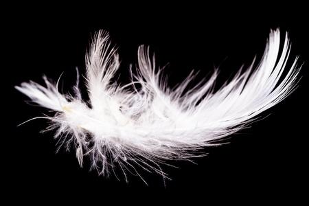 piuma bianca: Bianco d'oca piuma isolato su uno sfondo nero