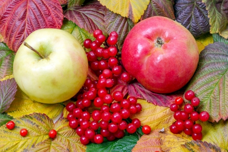 guelder rose berry: Apples and red viburnum on a background of autumn leaves.