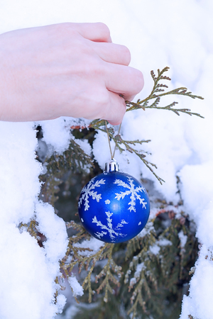 Hand with a blue glass ball and juniper branch. First Snow photo