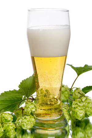 A glass of light beer and branch of hop isolated on white background photo
