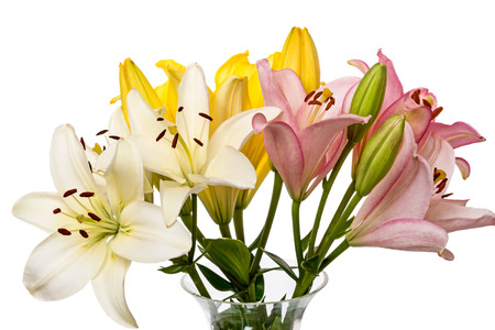 Lilies in a glass vase isolated on white  photo