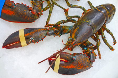 raw lobster: RAW  lobster in the snow on the shop counter Stock Photo