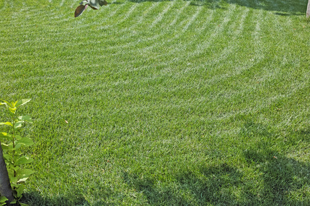 cropped: Cropped grass lawn. The quality of medium format