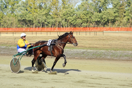 horse race: Tambov, Russia - October 17, 2015: Training race racehorse on Sports festival in the city of Tambov. Sunny autumn day